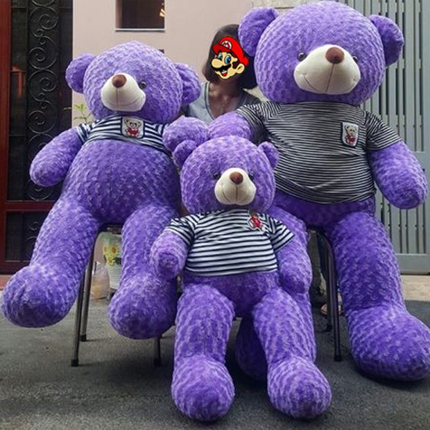 gau-teddy-lavender-mau-tim-gau-bong-can-tho